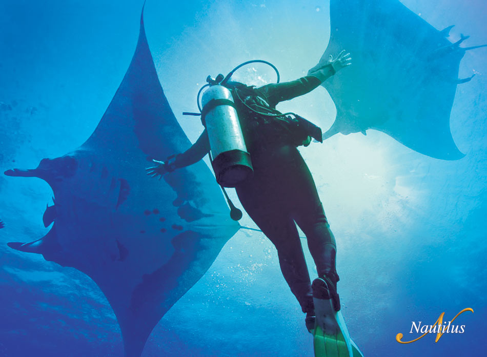 Dive at Socorro with Nautilus Liveaboards