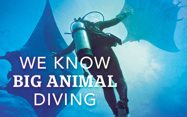 We know big animal diving