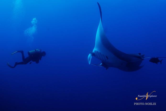 Giant Manta Diving