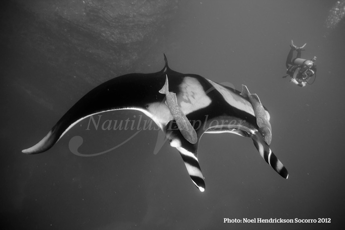 Giant Manta Diving Socorro