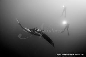 Giant Manta Diving Socorro Island