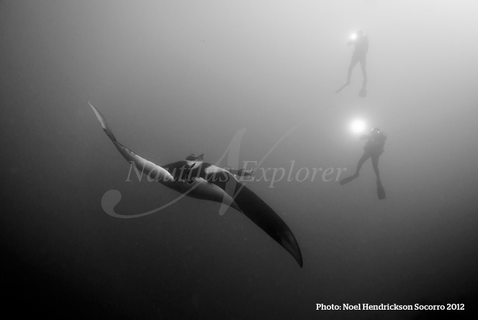 Giant Manta Diving Socorro Island