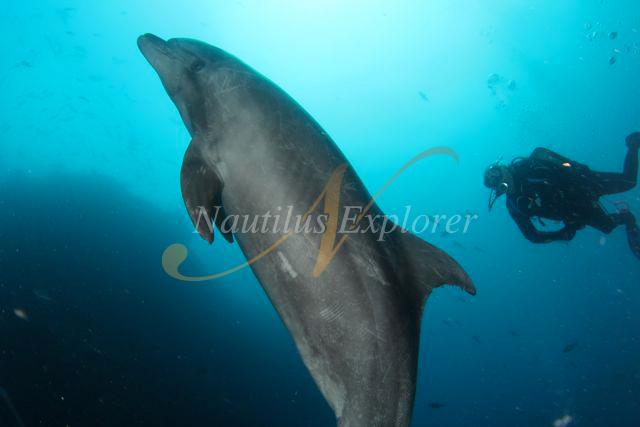 Nautilus Explorer Dolphin Diving