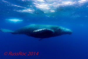 2014_Mar21_Whale-at-Roca-Pa