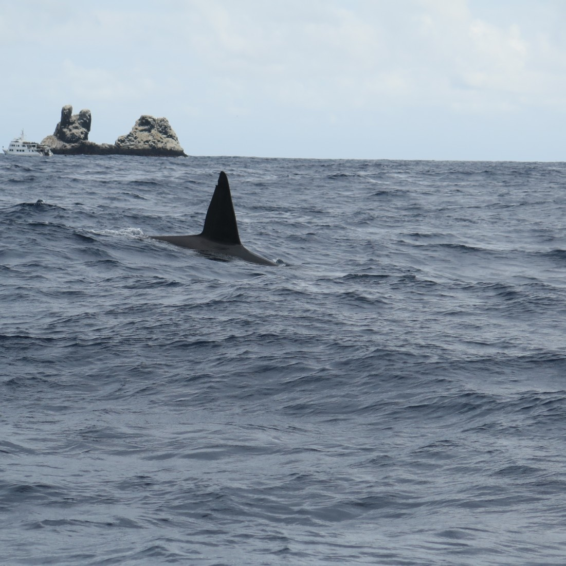 orca fin at socorro island