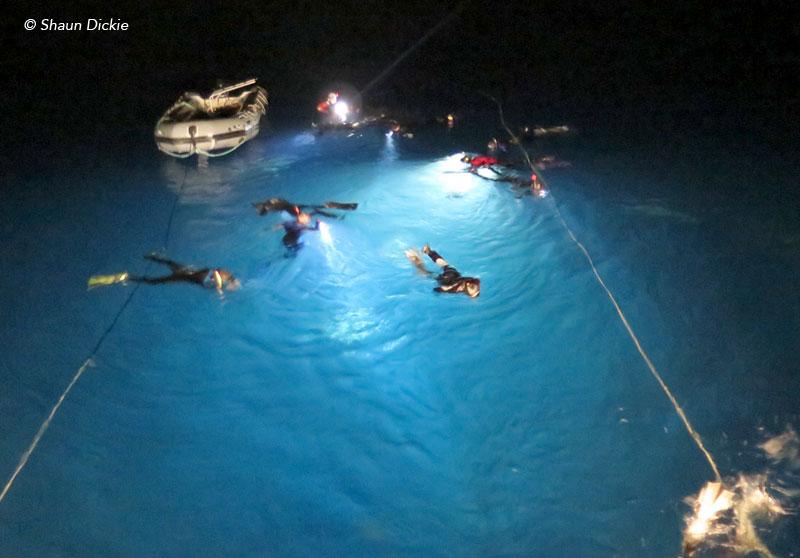 Night snorkelling at Socorro