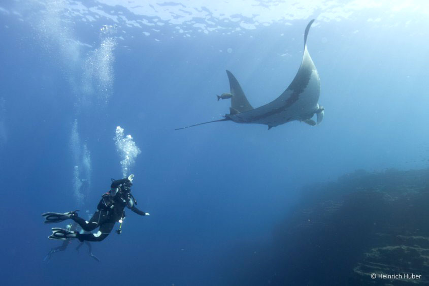 Divers interacting with a giant pacific manta