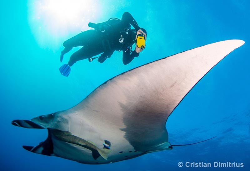 Diver and manta dancing together