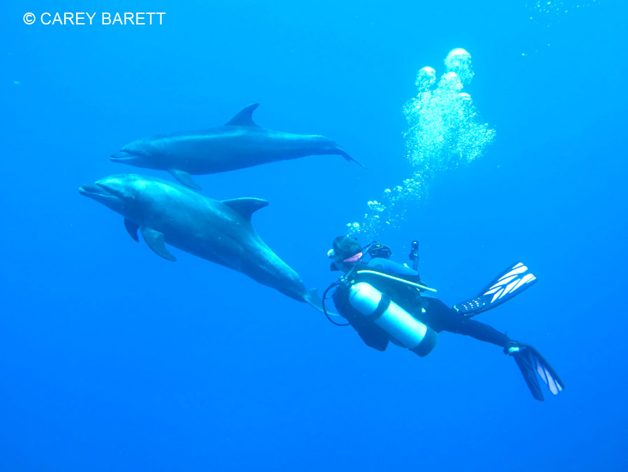 2 dolphins interacting with diver