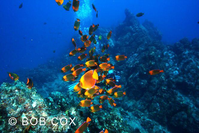 angel fish at socorro