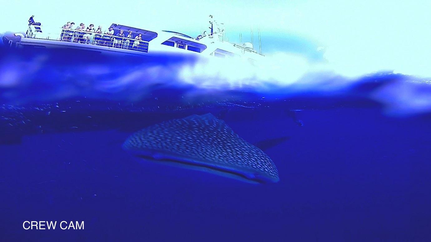 whalesharknautilusexplorer2