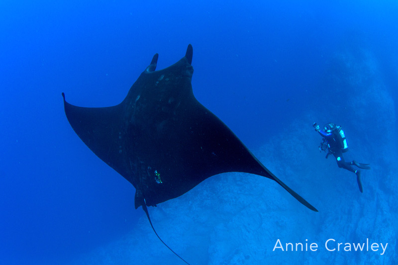 giant manta at the boiler with the nautilus belle amie