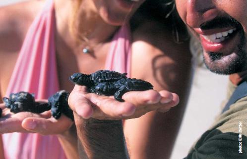 Tiny baby sea turtles on VIP expedition on the Nautilus