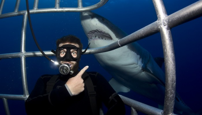 Big eyes and great white shark