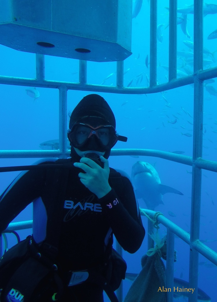 diver in cage with great white shark behind him