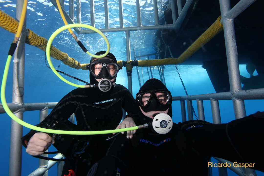 two divers in a cage while out on a great white shark dive