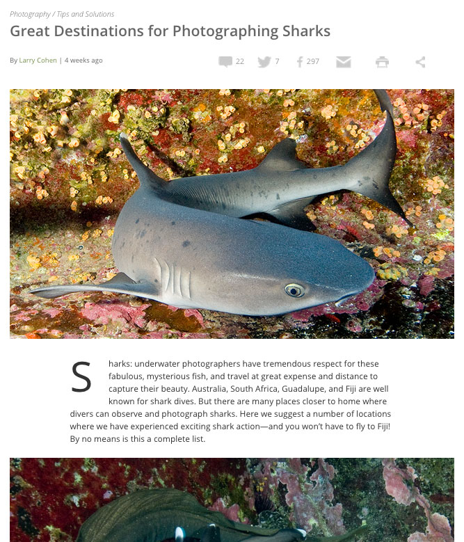 best places to dive with sharks!