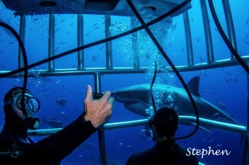 selfie with great white shark while diving in submersible cage