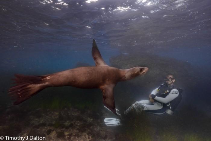 diver with sea lion
