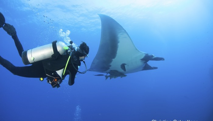 diver with giant manta
