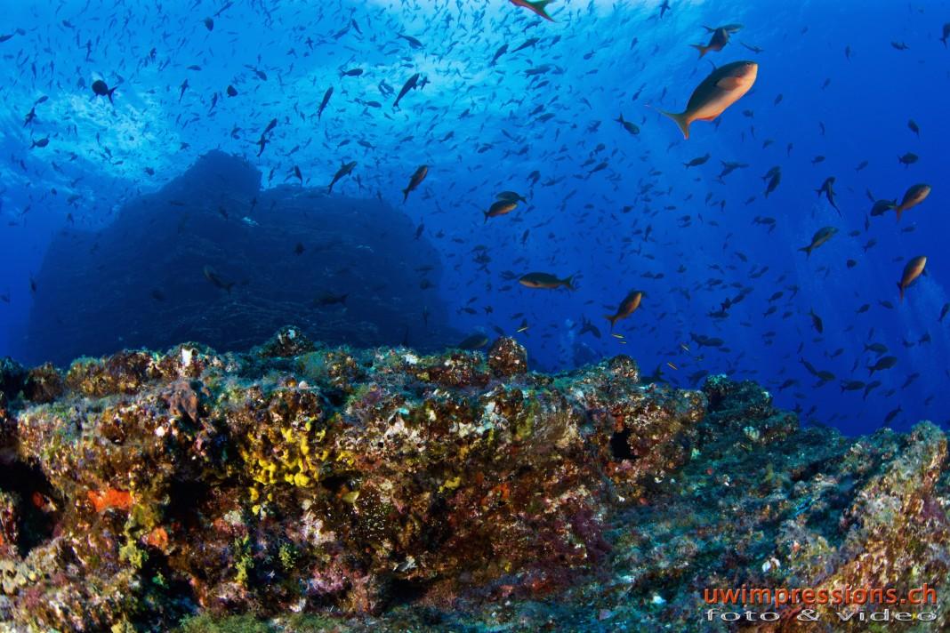 underwater sanctuary