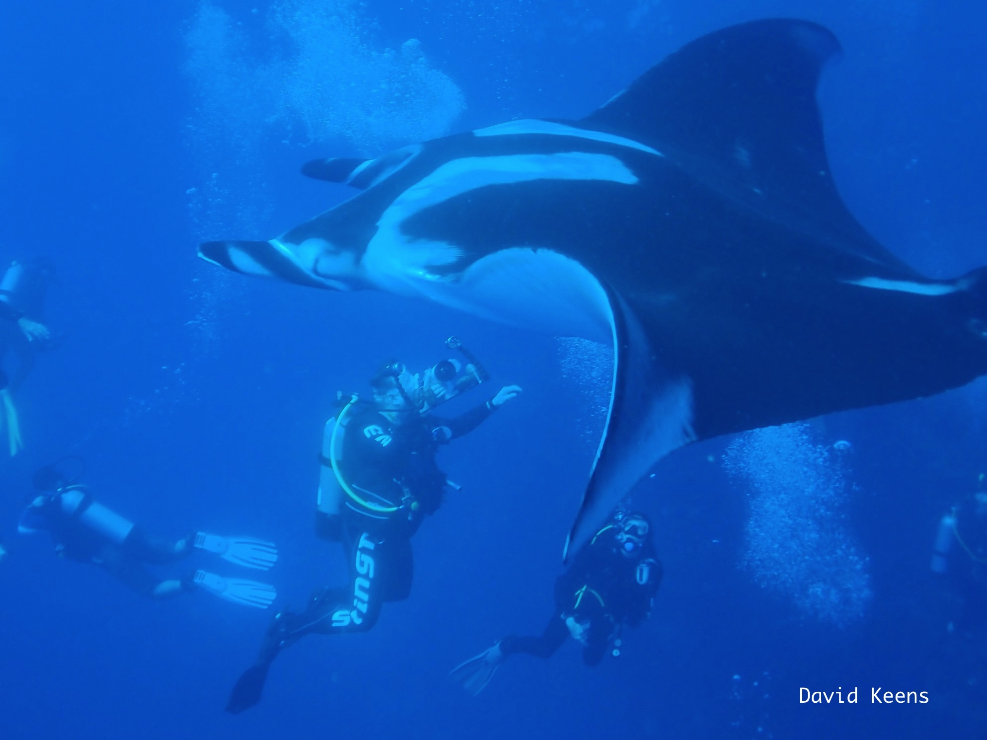 The giant mantas soaked up our bubbles like a massage. - Nautilus ...