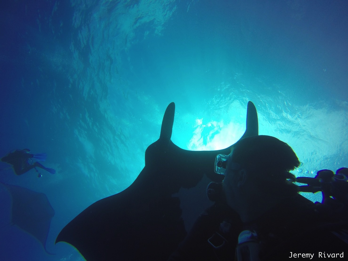 giant manta with diver below