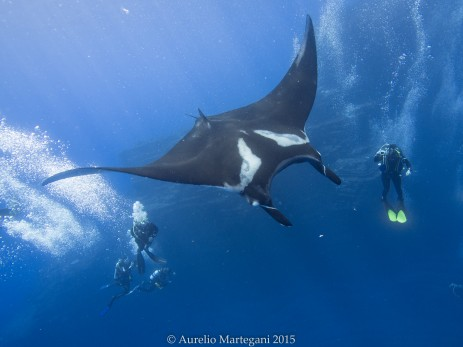 Giant manta with scuba divers