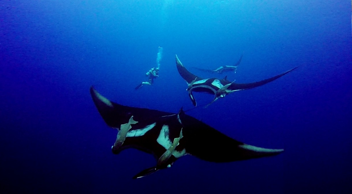 Justin-and-Mantas--Edited-and-Screen-shot-from-video-by-Justin-Cody.-Video-supplied-by-Alice.