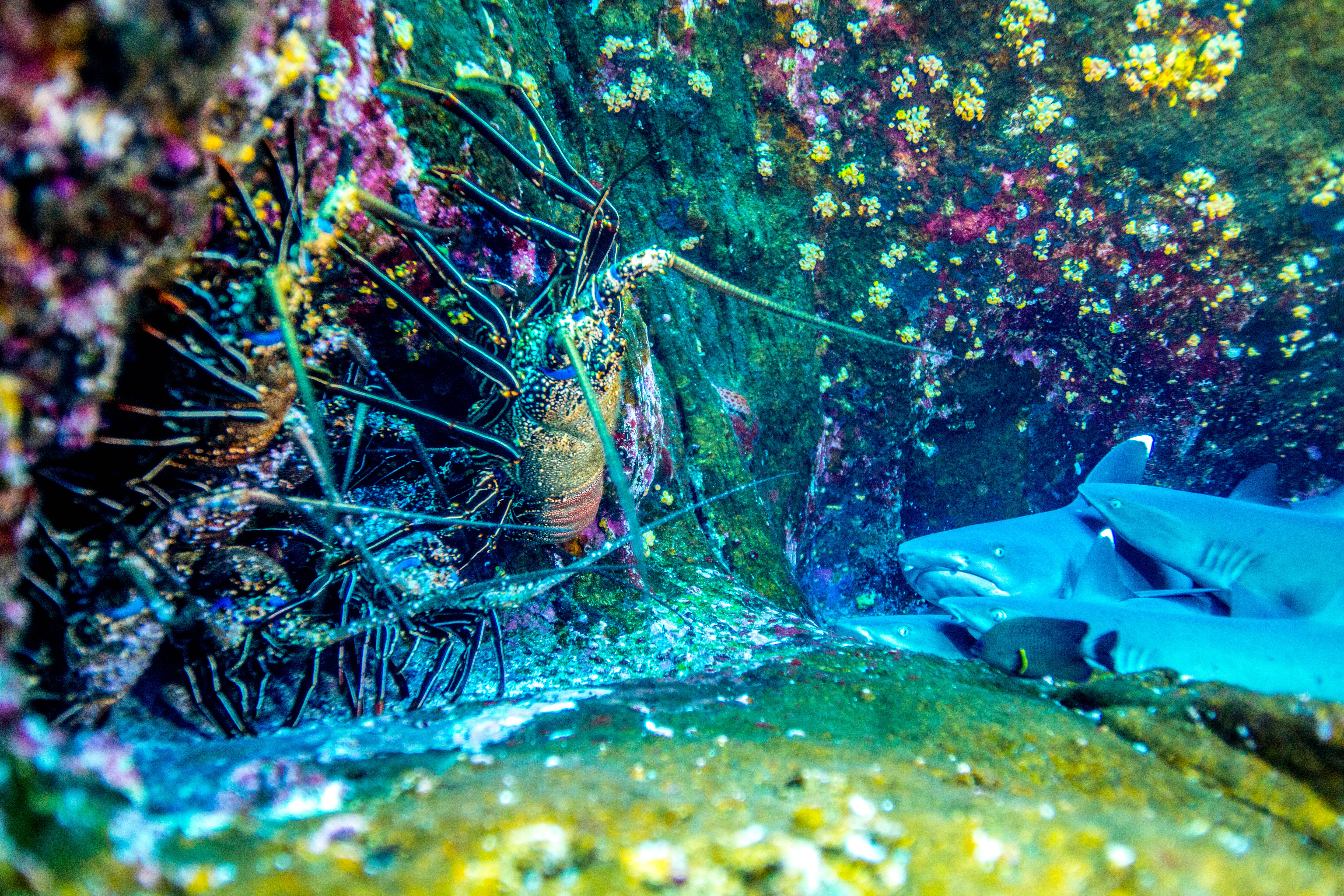 Colorful Crayfish and sharks