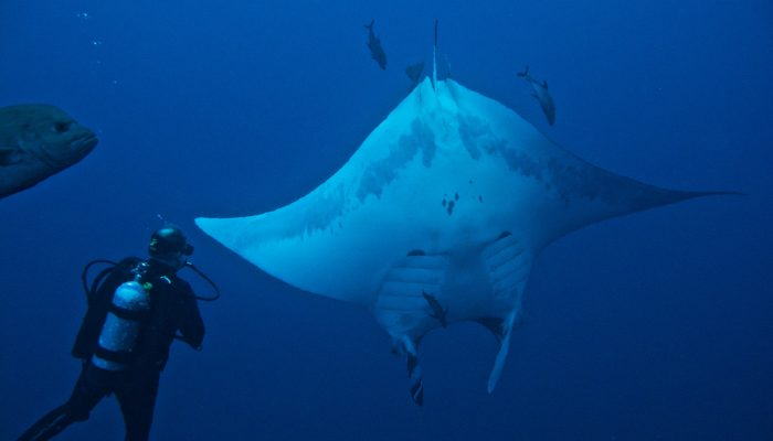 Socorro Mantas - encountered daily