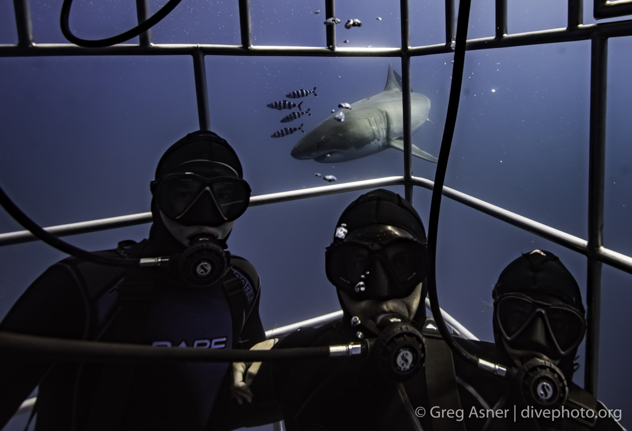 three divers share a selfie with a great white shark