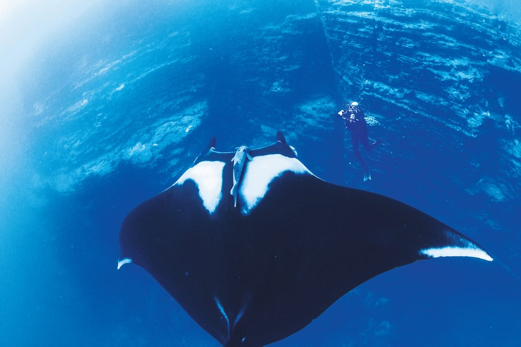 Giant Manta Ray at San Benedicto