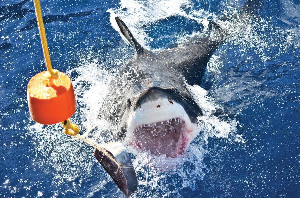 Brèche de requin