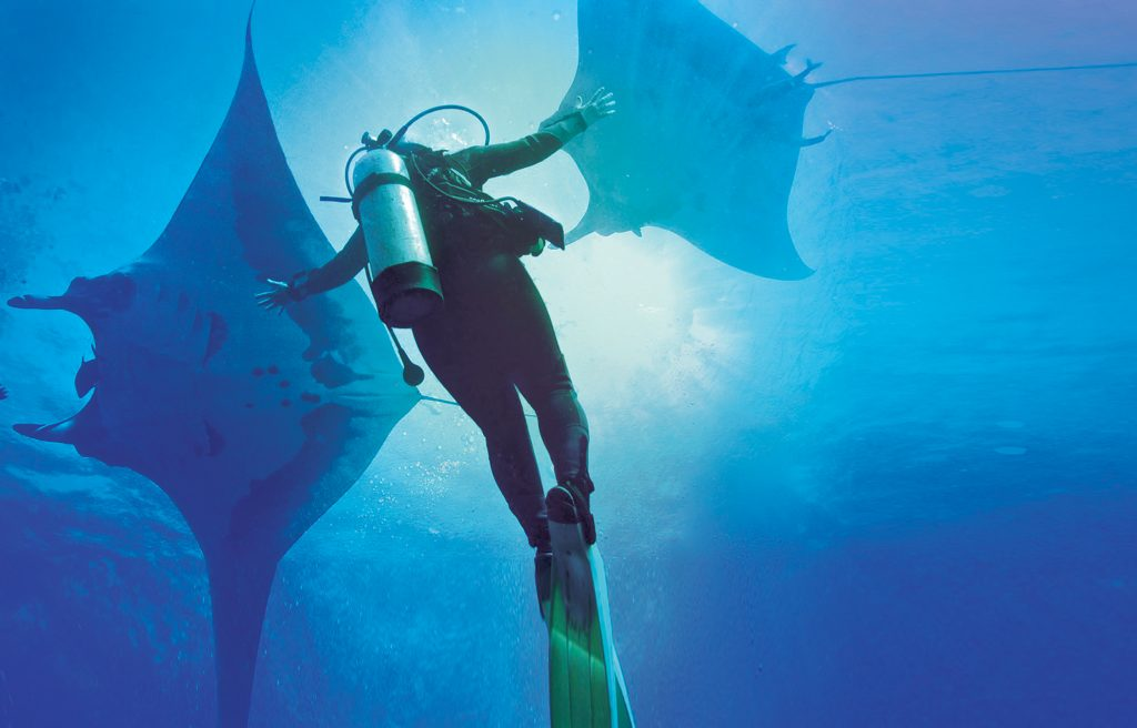 Diver with two oceanic Manta Ray