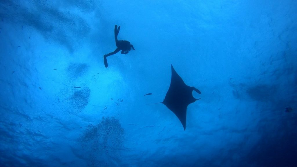 Maya offers a new perspective in Manta Love at Roca Partida