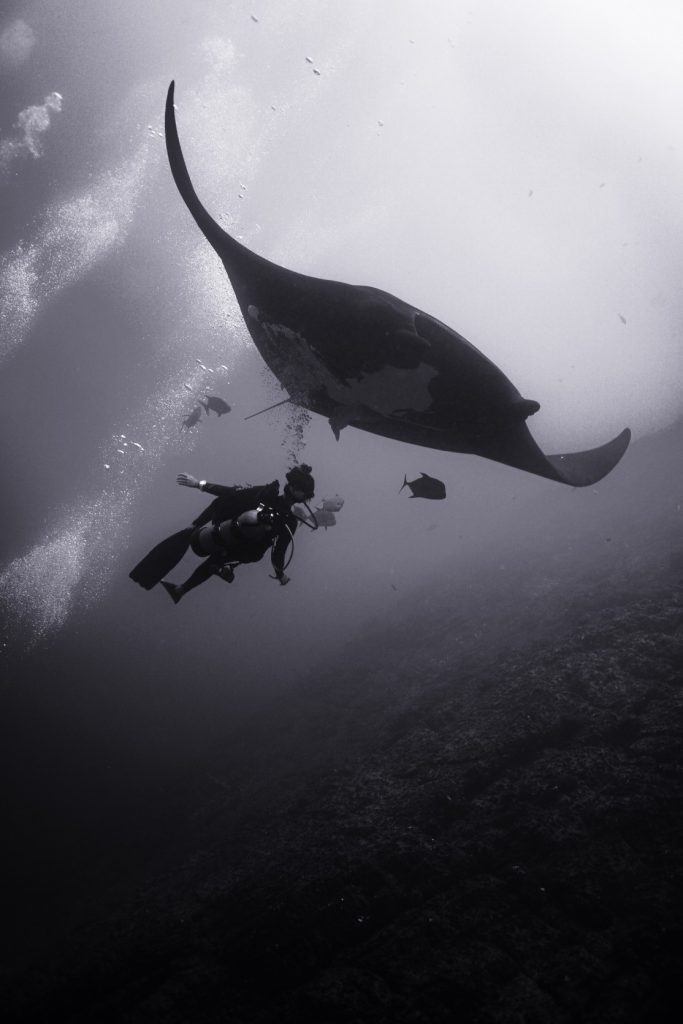 manta ray sweeps over diver bubbles