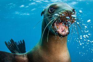 Cabo Pulmo Sea Lion