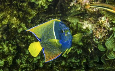 Tropical Fish in the Sea of Cortez