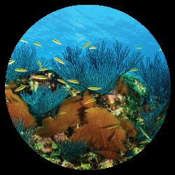 Cabo Pulmo Reef