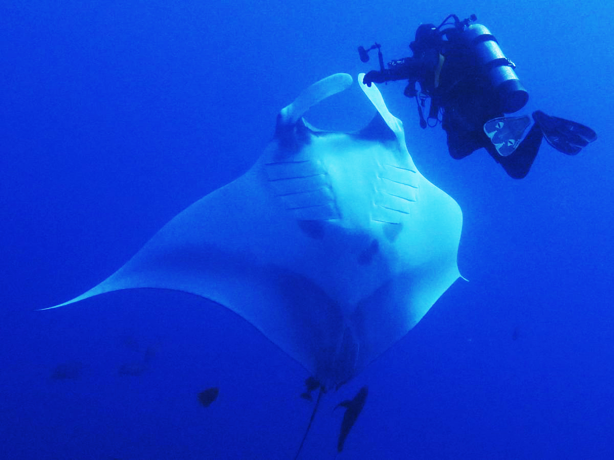Greeted by Manta Rays