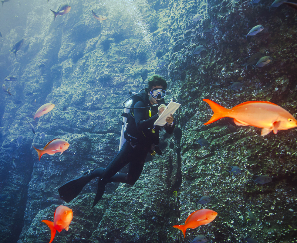 Miguel Counting Fish at Socorro, Part of his work on Giant Manta Identification