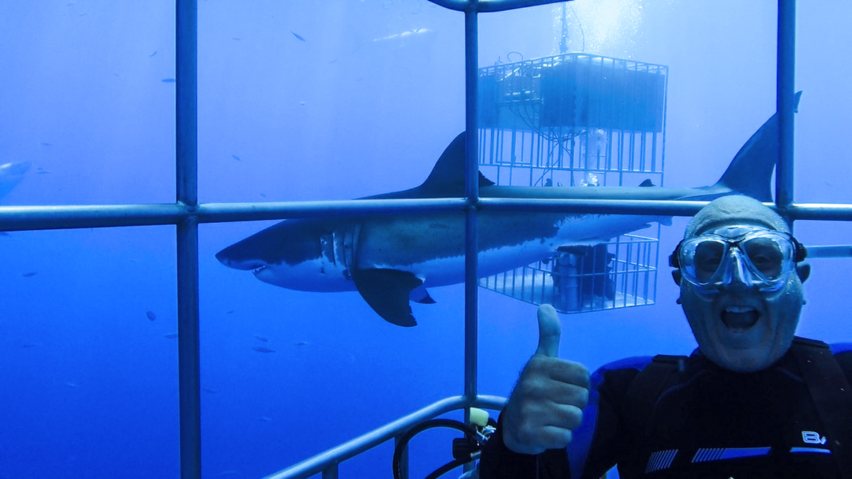 A Great White Cage Selfie