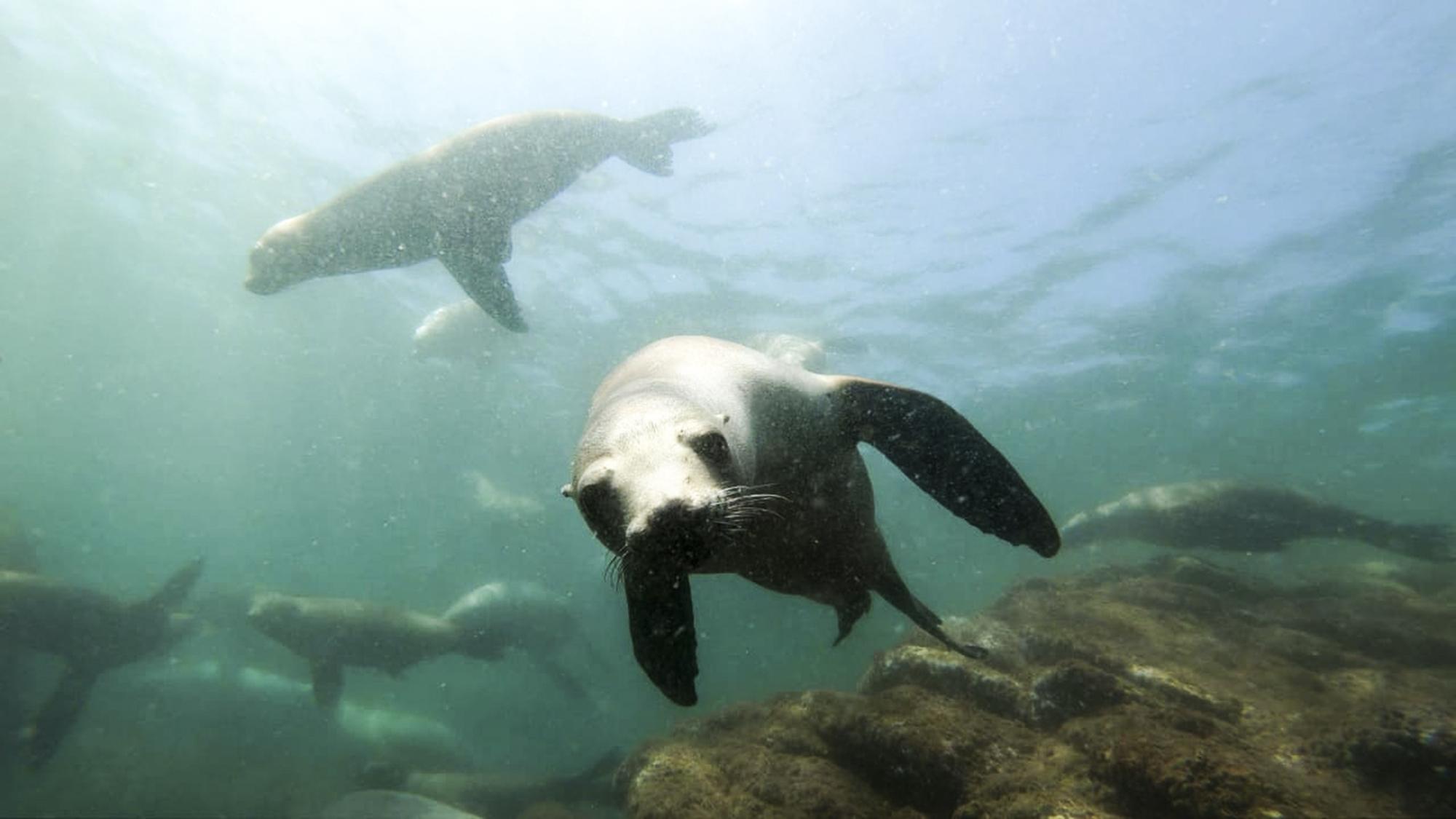 Sea lions play at Bahia de los Angeles