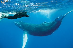 Socorro-baleine à bosse-001