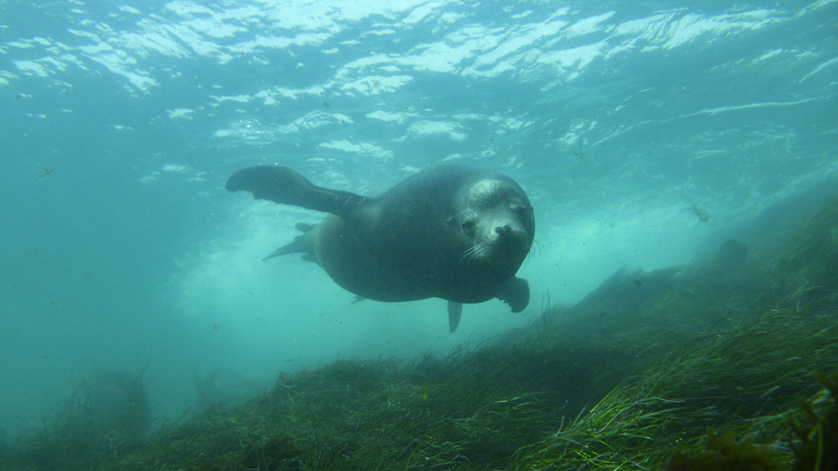 A happy sea lion. Photo by Nina Ehrich