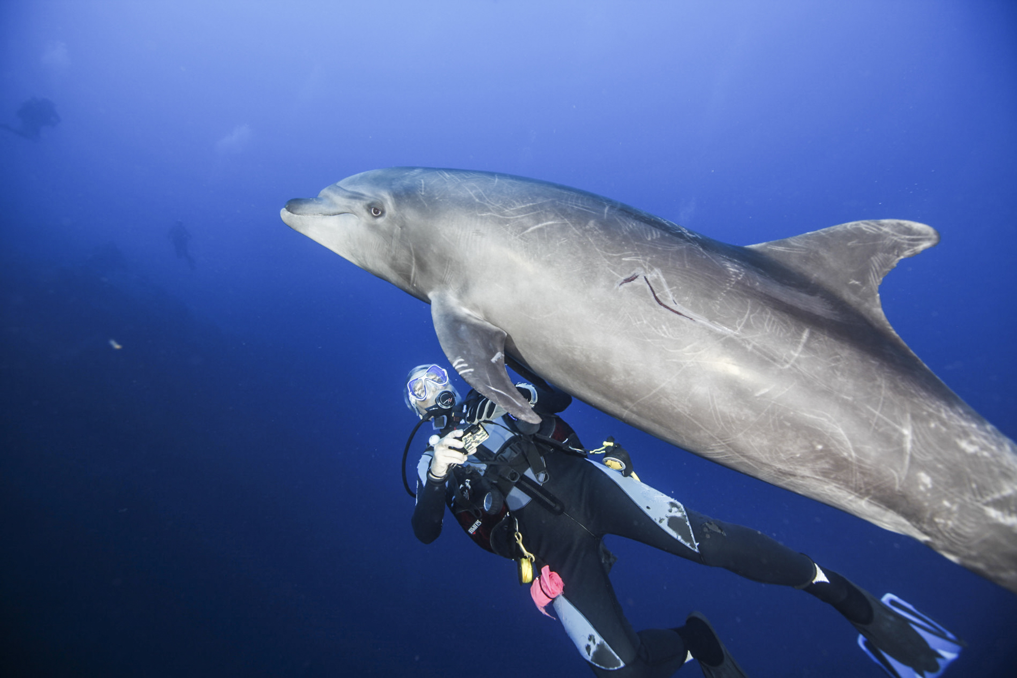 A diver swims under a dolphin at Cabo Pearce