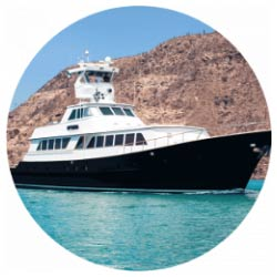 Nautilus Gallant Lady at Sea of Cortez
