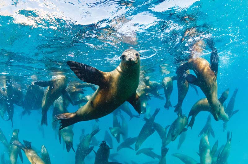 Dive with sea lions at Cabo Pulmo
