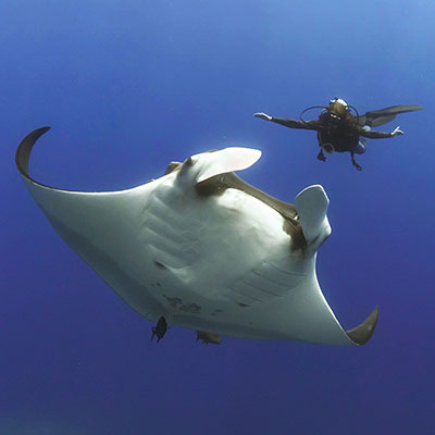The friendliest Giant Mantas